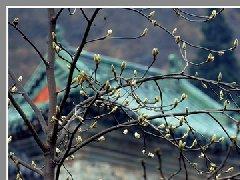"""""""太极湖杯""""2011中国武当摄影大展:含苞"""