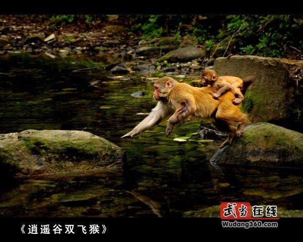 逍遥谷双飞猴