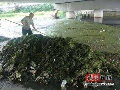 武当山特区城管局:清理打捞河道青苔,保障剑河整洁靓丽
