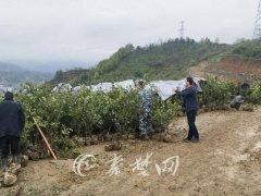 武当山杨家畈村:扶贫基地植树忙 产业扶贫暖人心