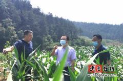 武当山特区农业农村局狠抓农作物病虫害防治工作
