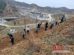 武当山林场组织干部职工开展春季植树活动